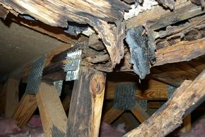 Close-up View - Wood Rot